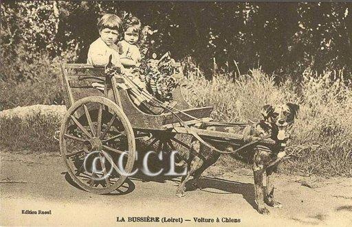 La fête de la châtaigne de La Bussière sous les averses dans Nos rencontres la-bussiere-voiture-a-chiens-t